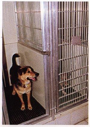 Northgate Veterinary Supply Kennels Dog Runs Animal